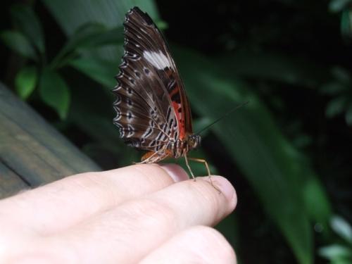 butterflies6.jpg